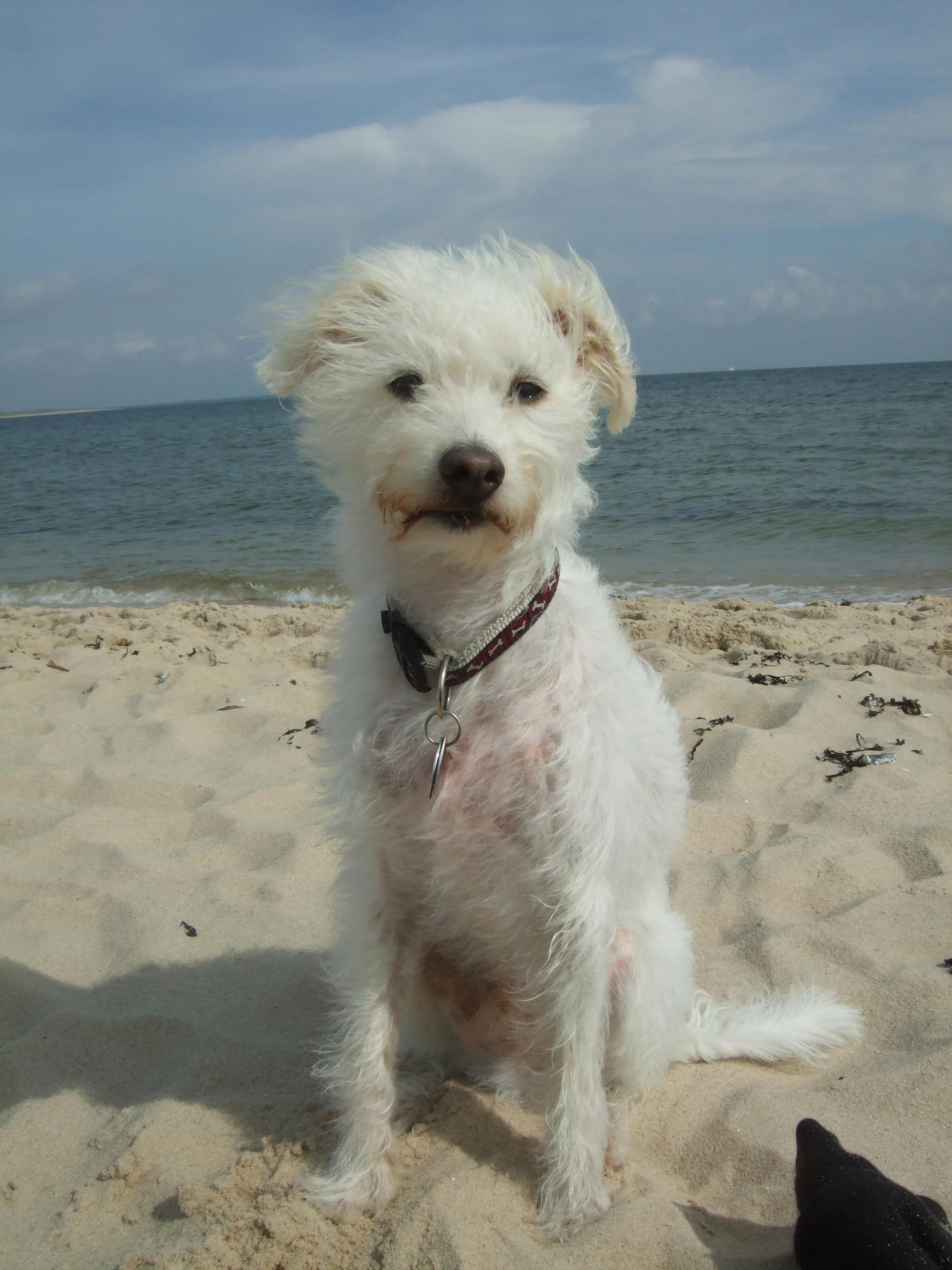 Urlaub mit Hund.
