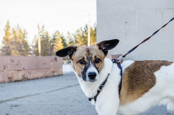 Hundeversicherung durch die NV auch beim Gassigehen.