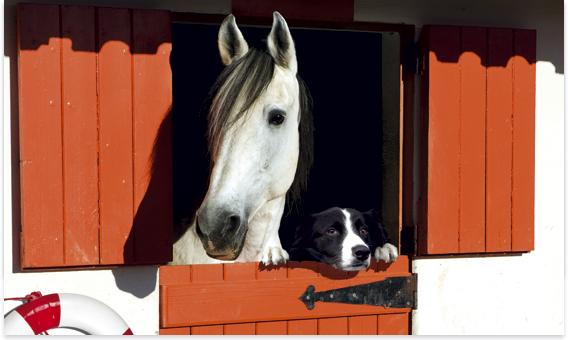 Tierhalter-Haftpflicht - eine Versicherung ist ein Muss.