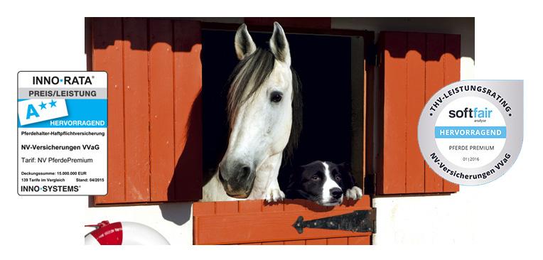 blogbeitrag_pferde