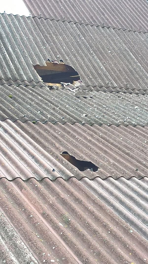 Rind auf dem Dach, Schaden 1